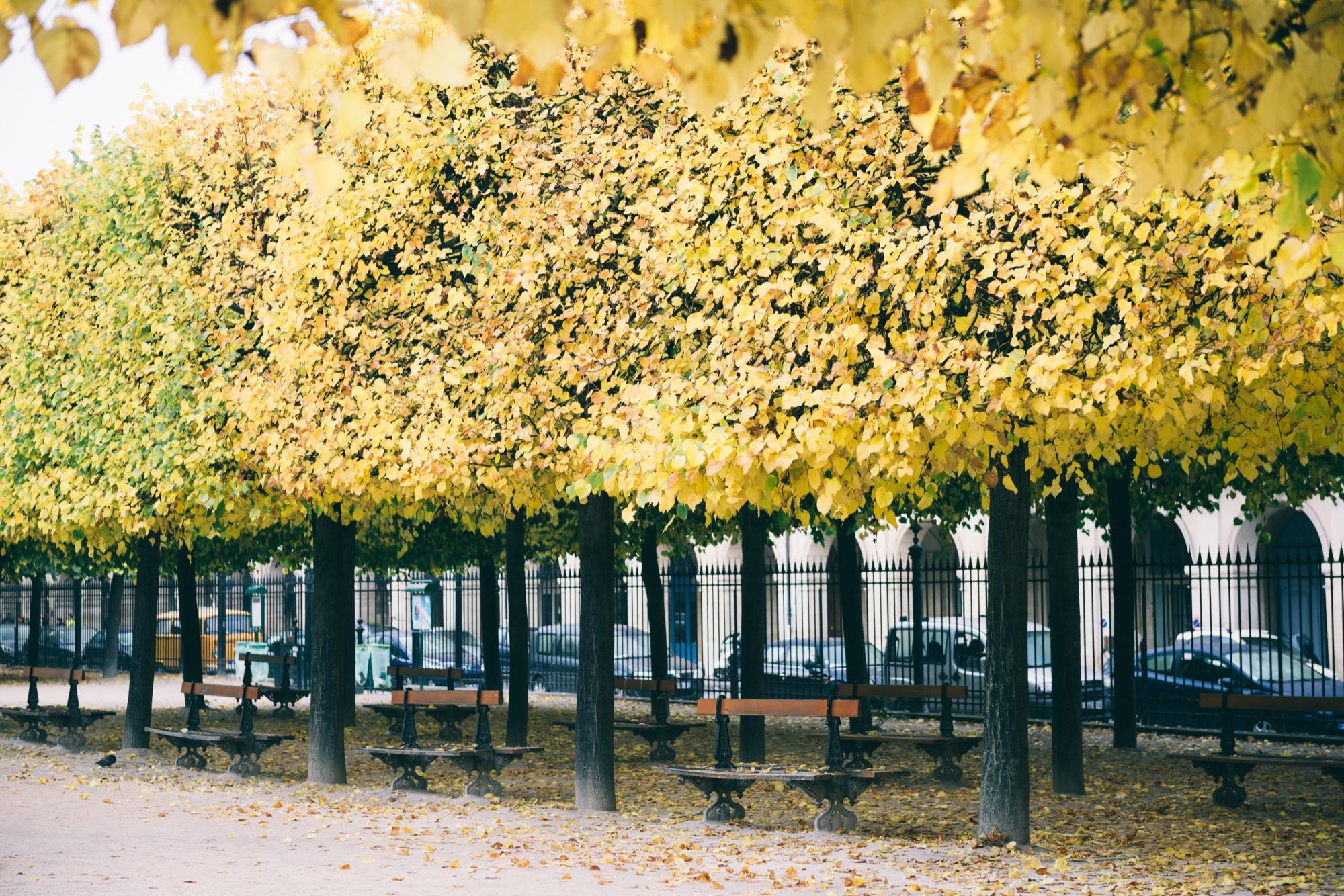 Place des Vosges - Maison Mauban Paris